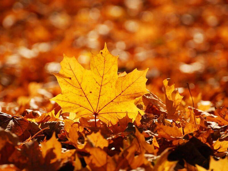 Autumn Offer - Special Offers - VILA VITA Parc Resort & Spa